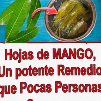 Té de hojas de mango, una bebida con propiedades curativas sorprendentes