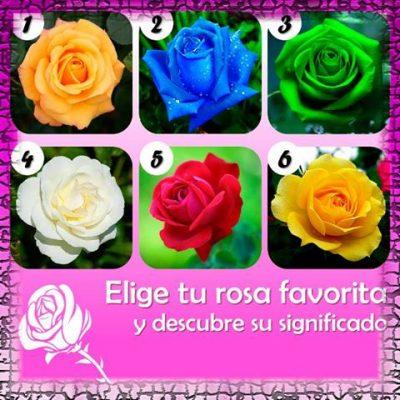 El test de las rosas.
