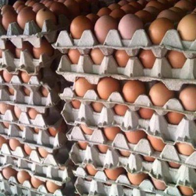 Nunca MAS botes los cartones de Huevos