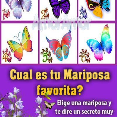 Las mariposas son criaturas hermosas y un símbolo de libertad y alegría.