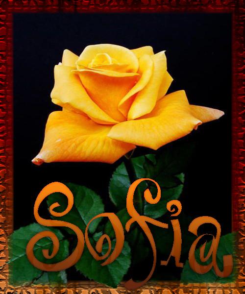 Nombre en Rosas,Sofia