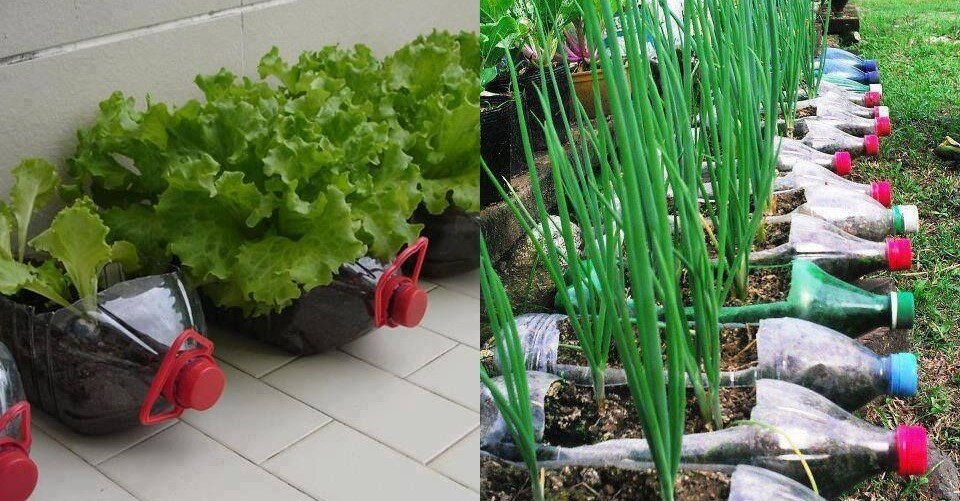 12 alimentos que puedes cultivar en botellas de plástico